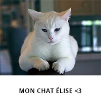 mon chat elise