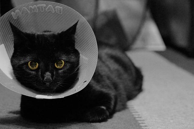 Pour éviter les puces, acheter un collier chat antiparasitaire