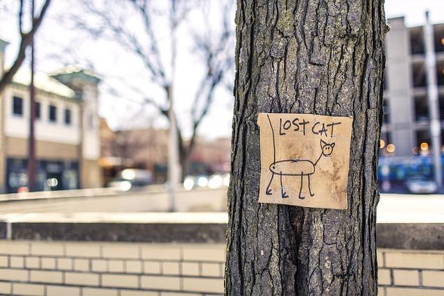 une affiche de chat perdu humoristique