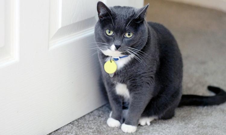 Sans chatière, votre chat attend à la porte